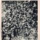 De Willem II-er nr. 7 1958